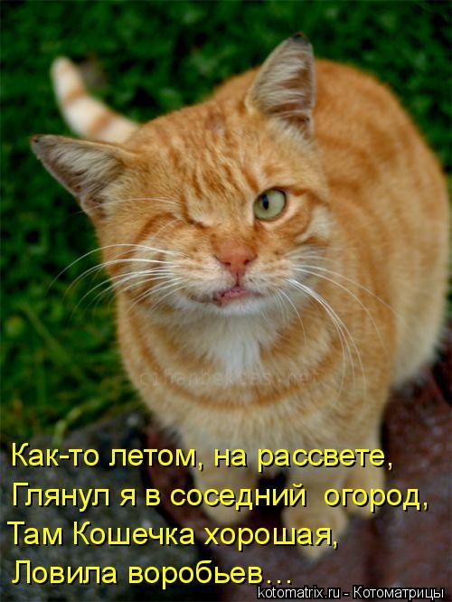 Котоматрица: Ловила воробьев… Там Кошечка хорошая,  Глянул я в соседний  огород,  Как-то летом, на рассвете,