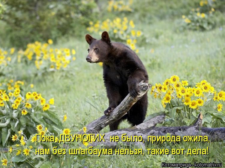Котоматрица: Пока  ДВУНОГИХ  не было, природа ожила, нам без шлагбаума нельзя, такие вот дела!