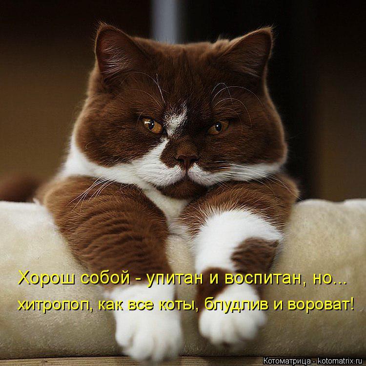 Котоматрица: Хорош собой - упитан и воспитан, но... хитропоп, как все коты, блудлив и вороват!