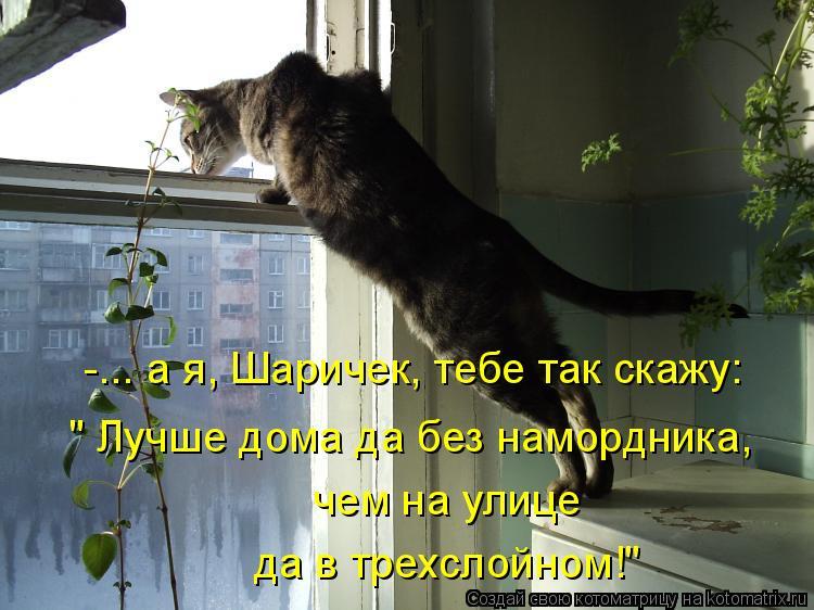 "Котоматрица: -... а я, Шаричек, тебе так скажу: "" Лучше дома да без намордника,   чем на улице да в трехслойном!"""