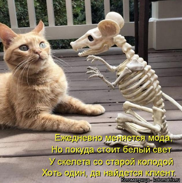 Котоматрица: Хоть один, да найдется клиент. У cкелета со старой колодой Но покуда cтоит белый свет Ежедневно меняется мода,