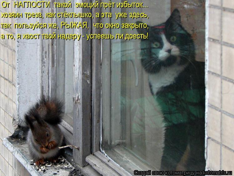 Котоматрица: От  НАГЛОСТИ  такой  эмоций прёт избыток... хозяин трезв, как стёклышко, а эта  уже здесь, так  пользуйся же, РЫЖАЯ,  что окно закрыто, а то, я хво?