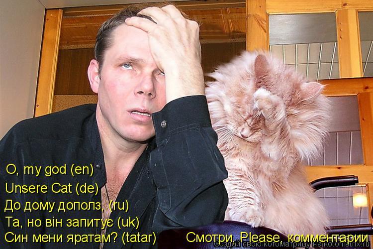 Котоматрица: Син мени яратам? (tatar)        Смотри, Please, комментарии Та, но вiн запитує (uk) До дому дополз, (ru) Unsere Cat (de) O, my god (en)