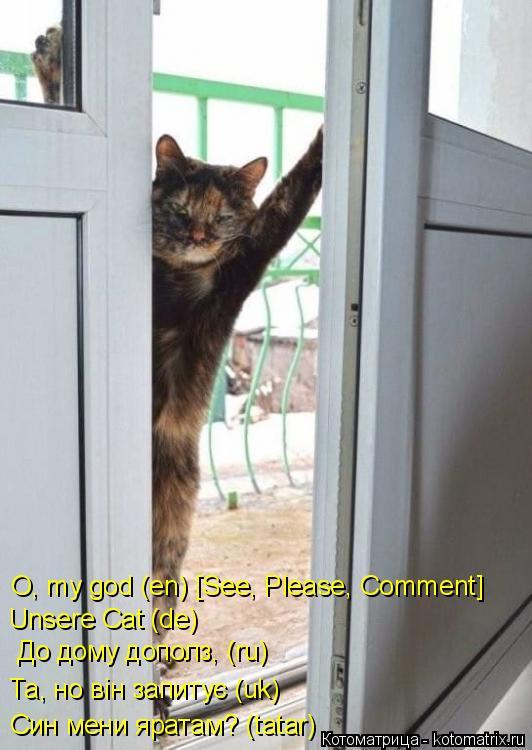Котоматрица: Син мени яратам? (tatar)  Та, но вiн запитує (uk) До дому дополз, (ru) Unsere Cat (de) O, my god (en) [See, Please, Comment]