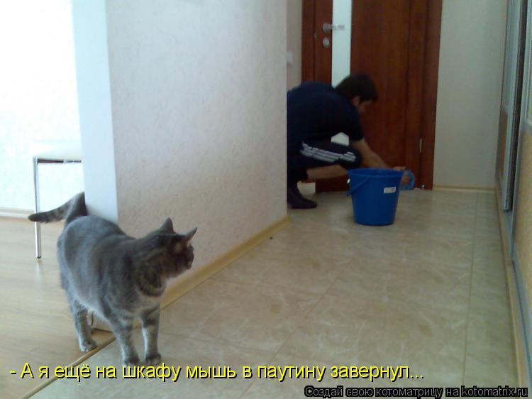 Котоматрица: - А я ещё на шкафу мышь в паутину завернул...