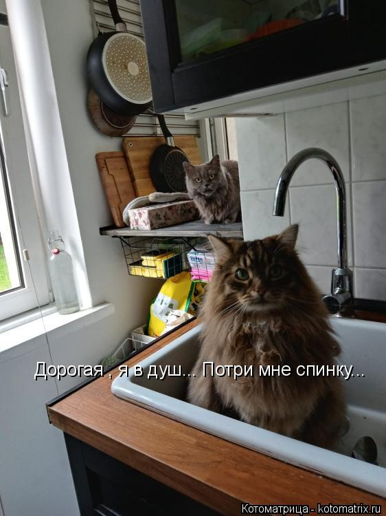Котоматрица: Дорогая , я в душ... Потри мне спинку...
