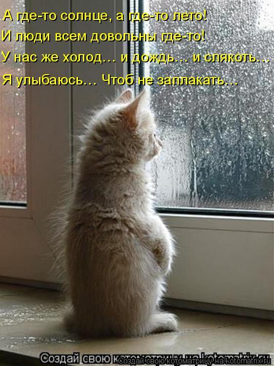 Котоматрица: А где-то солнце, а где-то лето! И люди всем довольны где-то! У нас же холод… и дождь… и слякоть… Я улыбаюсь… Чтоб не заплакать…