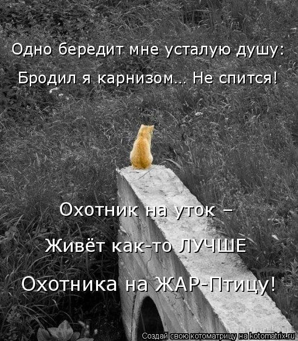 Котоматрица: Бродил я карнизом… Не спится! Одно бередит мне усталую душу: Охотник на уток – Живёт как-то ЛУЧШЕ Охотника на ЖАР-Птицу!