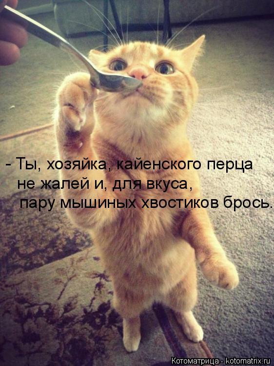 Котоматрица: - Ты, хозяйка, кайенского перца  не жалей и, для вкуса,  пару мышиных хвостиков брось.