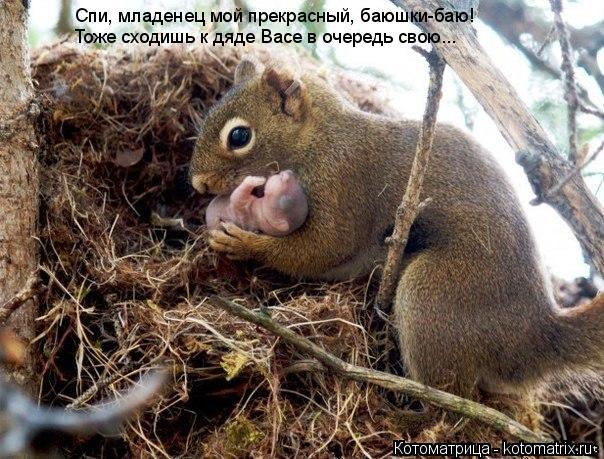 Котоматрица: Спи, младенец мой прекрасный, баюшки-баю! Тоже сходишь к дяде Васе в очередь свою...