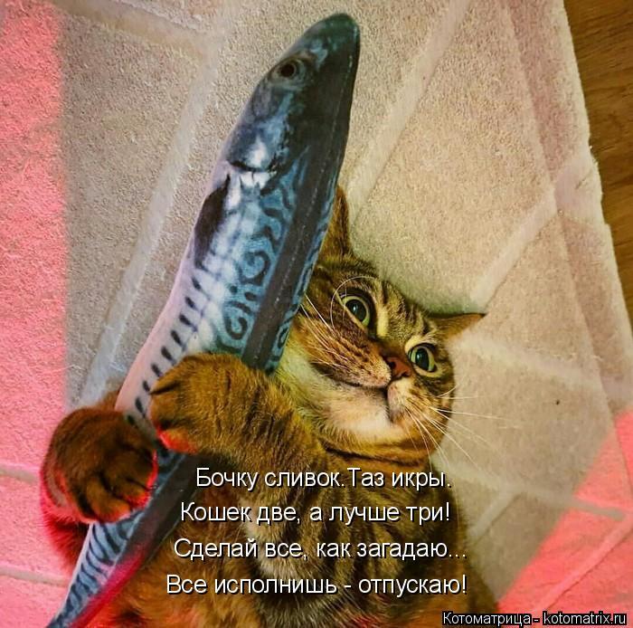 Котоматрица: Бочку сливок.Таз икры. Кошек две, а лучше три! Сделай все, как загадаю... Все исполнишь - отпускаю!