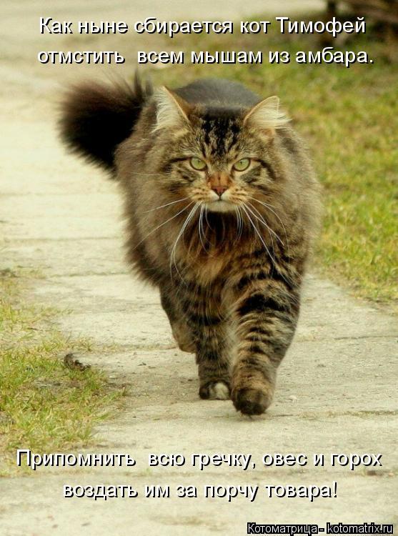 Котоматрица: Припомнить  всю гречку, овес и горох воздать им за порчу товара! Как ныне сбирается кот Тимофей отмстить  всем мышам из амбара.