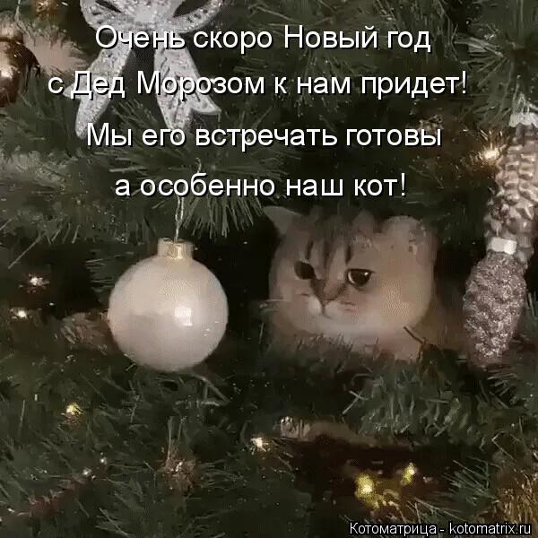 Котоматрица: Очень скоро Новый год с Дед Морозом к нам придет! Мы его встречать готовы а особенно наш кот!