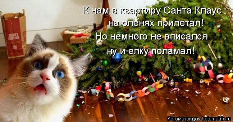 Котоматрица: К нам в квартиру Санта Клаус  на оленях прилетал! Но немного не вписался ну и елку поламал!