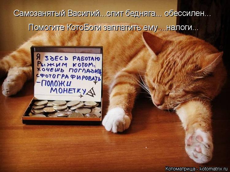 Котоматрица: Самозанятый Василий...спит бедняга... обессилен... Помогите КотоБоги заплатить ему ...налоги...