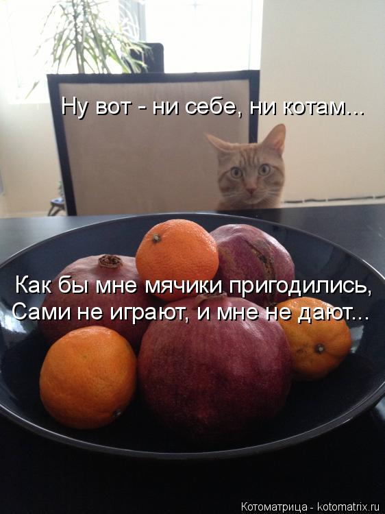 Котоматрица: Ну вот - ни себе, ни котам... Как бы мне мячики пригодились, Сами не играют, и мне не дают...