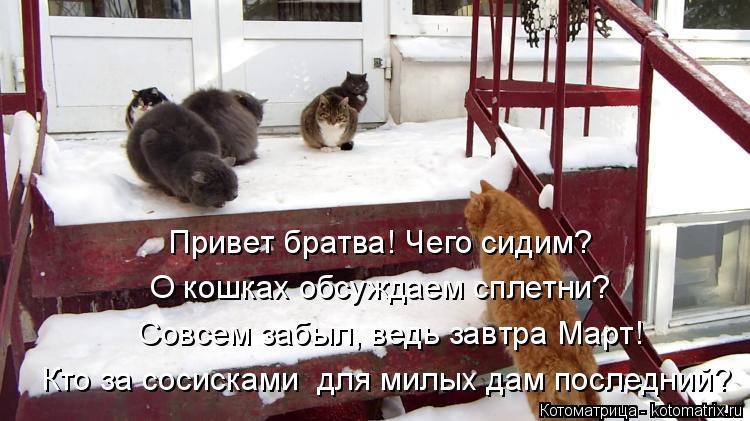 Котоматрица: Привет братва! Чего сидим? О кошках обсуждаем сплетни? Совсем забыл, ведь завтра Март! Кто за сосисками  для милых дам последний?