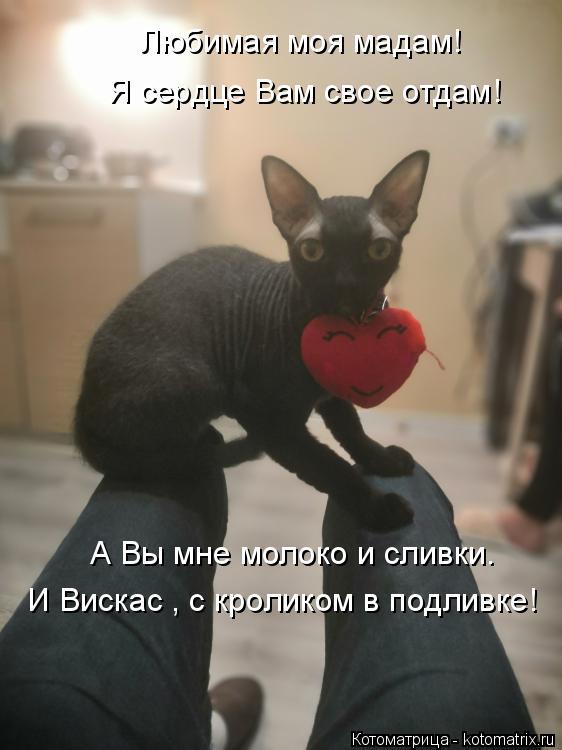 Котоматрица: Любимая моя мадам! Я сердце Вам свое отдам! А Вы мне молоко и сливки. И Вискас , с кроликом в подливке!