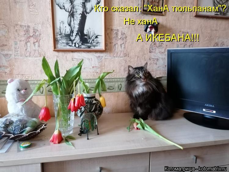 """Котоматрица: Не ханА А ИКЕБАНА!!! Кто сказал: """"ХанА тюльпанам""""?"""