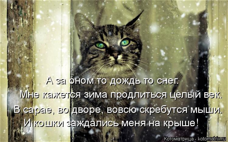 Котоматрица: И кошки заждались меня на крыше! Мне кажется зима продлиться целый век. А за оном то дождь то снег. В сарае, во дворе, вовсю скребутся мыши.