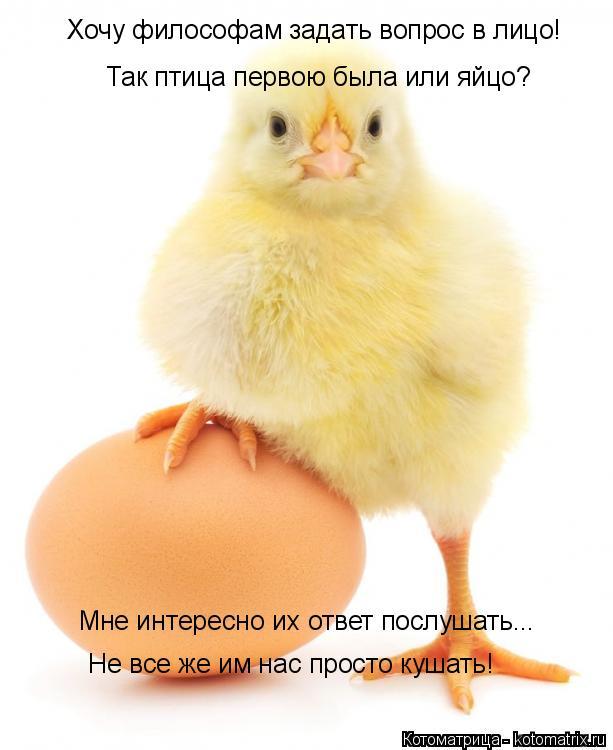 Котоматрица: Хочу философам задать вопрос в лицо! Так птица первою была или яйцо? Мне интересно их ответ послушать... Не все же им нас просто кушать!