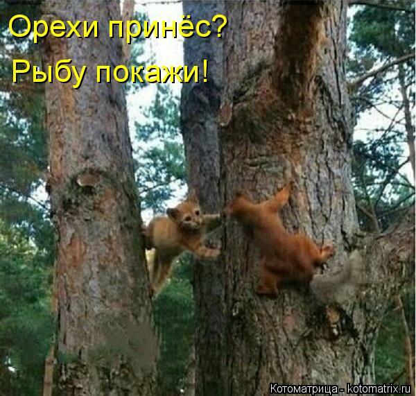 Котоматрица: Орехи принёс? Рыбу покажи!
